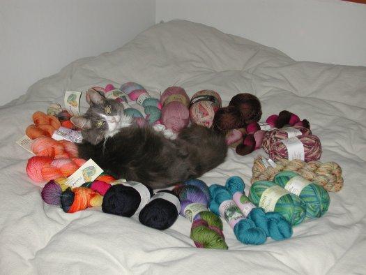 Suma and yarn stash.jpg